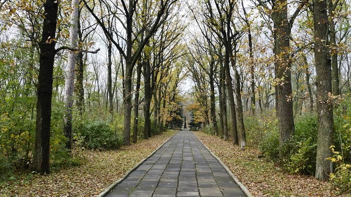 Лісна алея