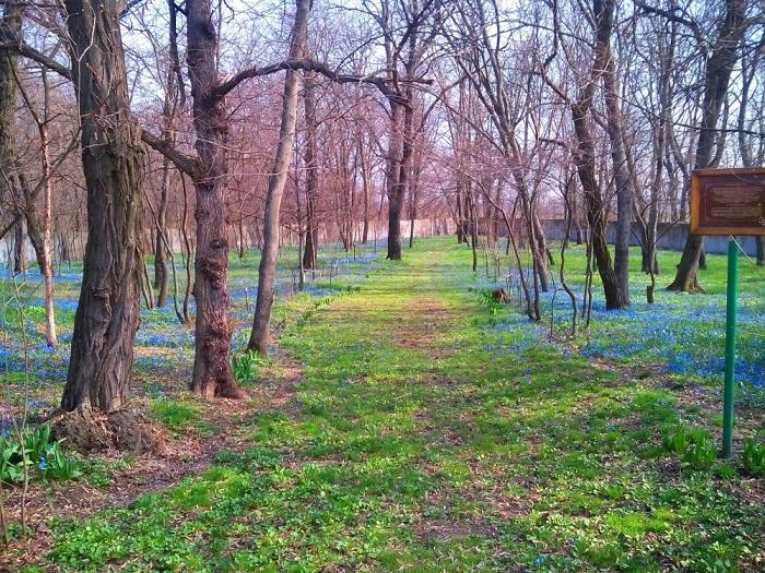 Нескучний ліс