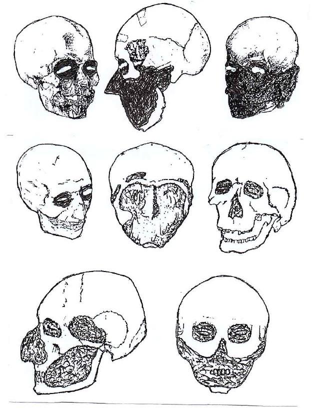 Моделі черепу