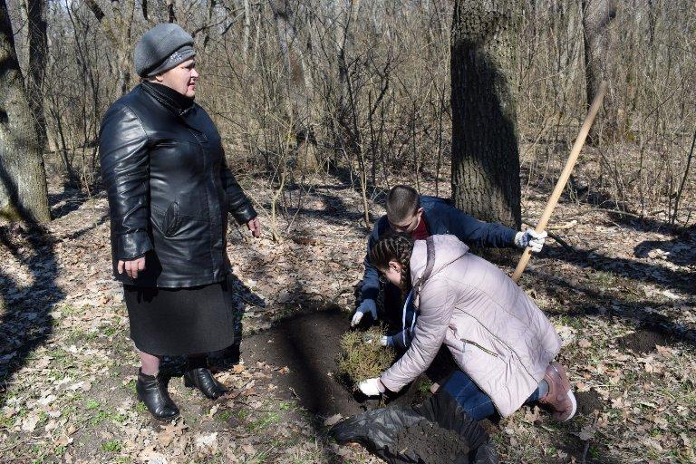 Висаджування саджанців дерев