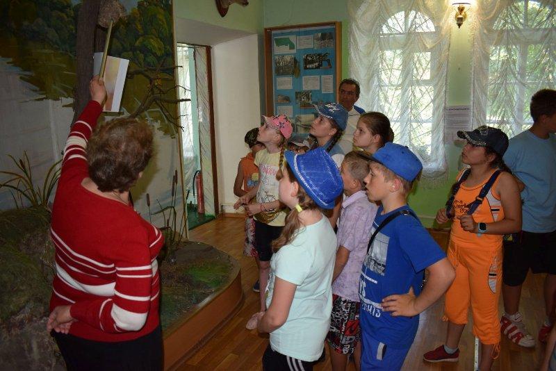 Великоанадольський музей лісу 3